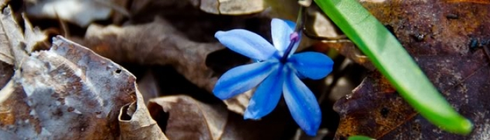 /media/mod_jmslideshow/100x65_blue-flower.jpg